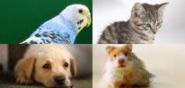 Tiernahrung und -Zubehör